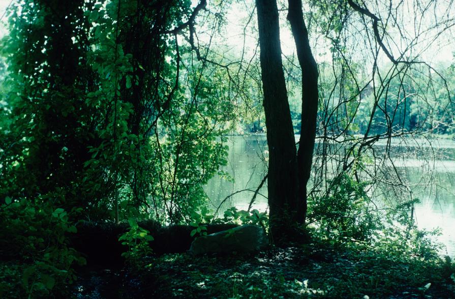 nature32.jpg