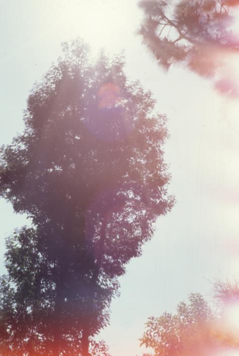 nature36.jpg