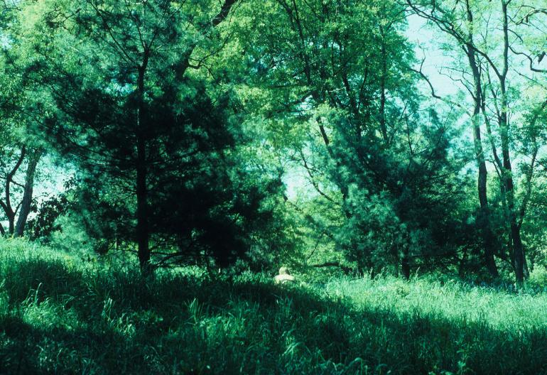 nature44.jpg