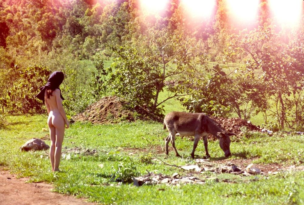 donkeys_2.jpg