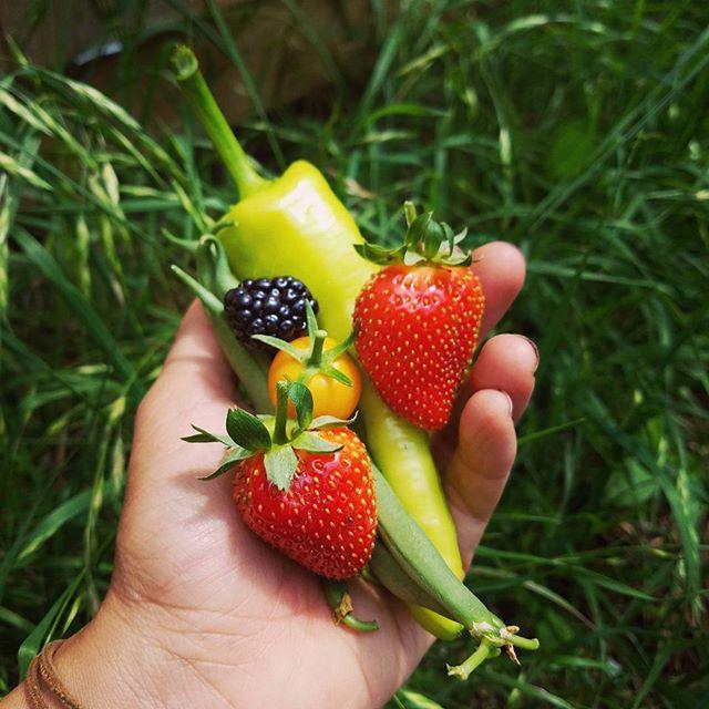 Garden fuel