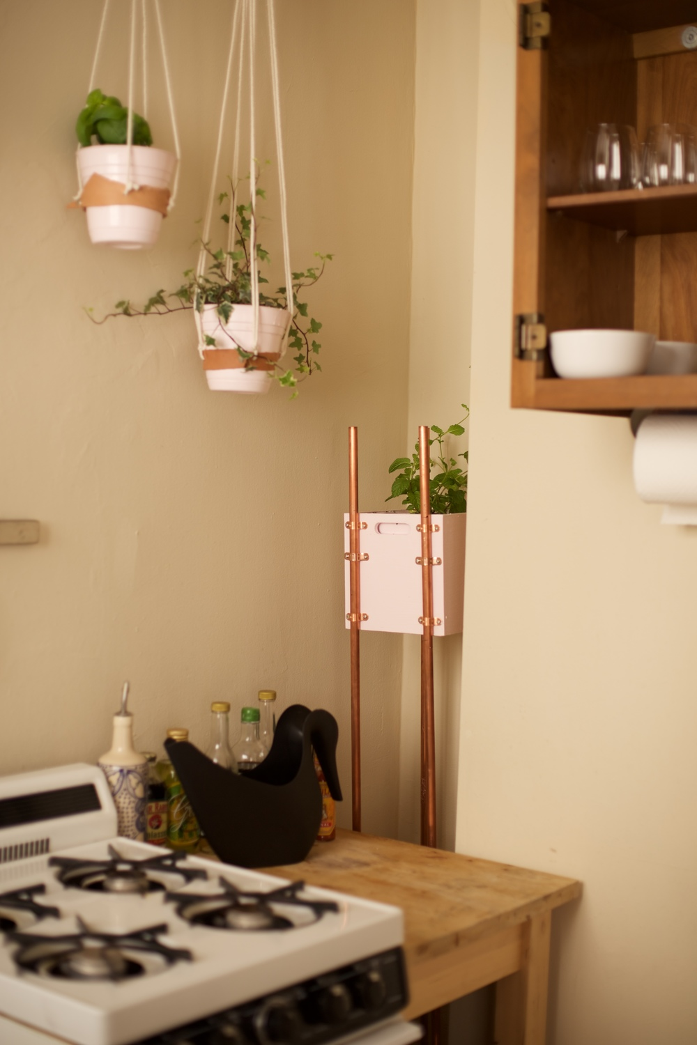 Plants in a tiny apartment kitchen