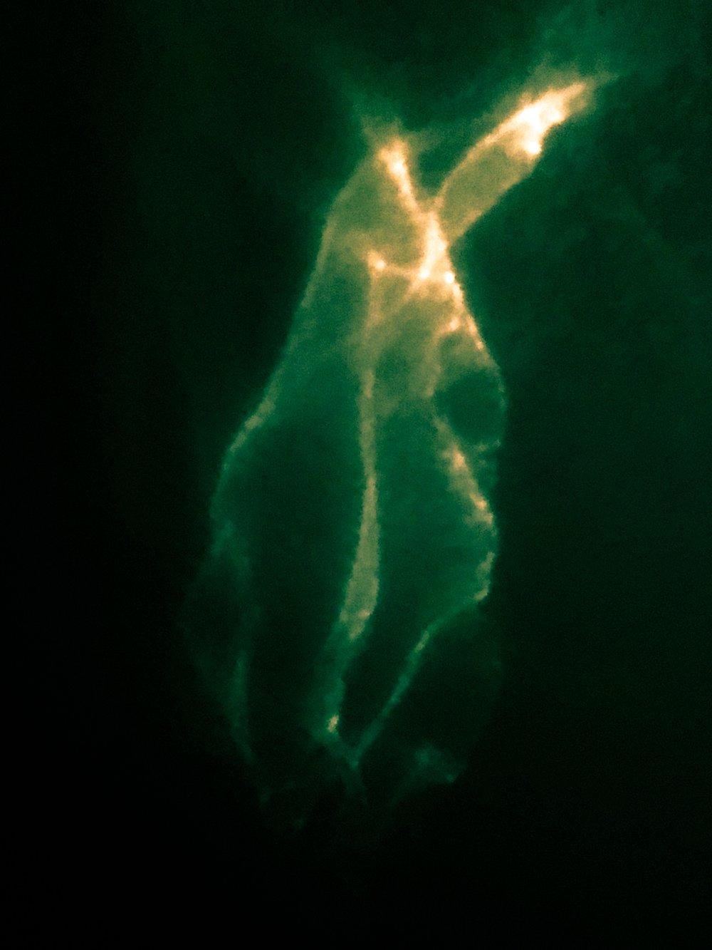 Cunt is Nebula