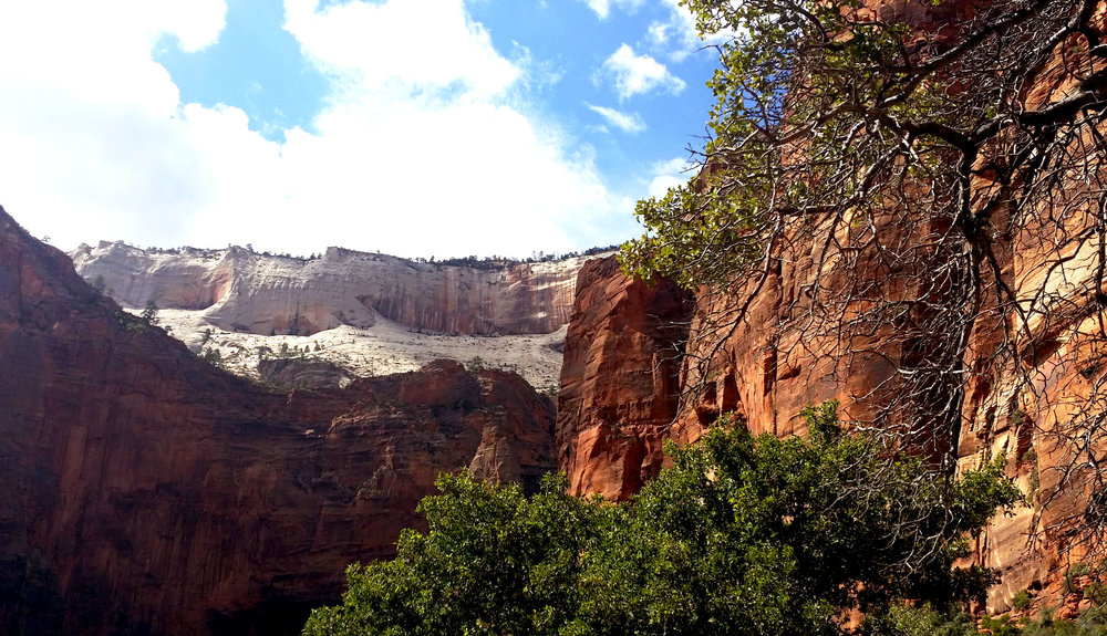 A view in Zion Canyon.  Click to enlarge the photo.