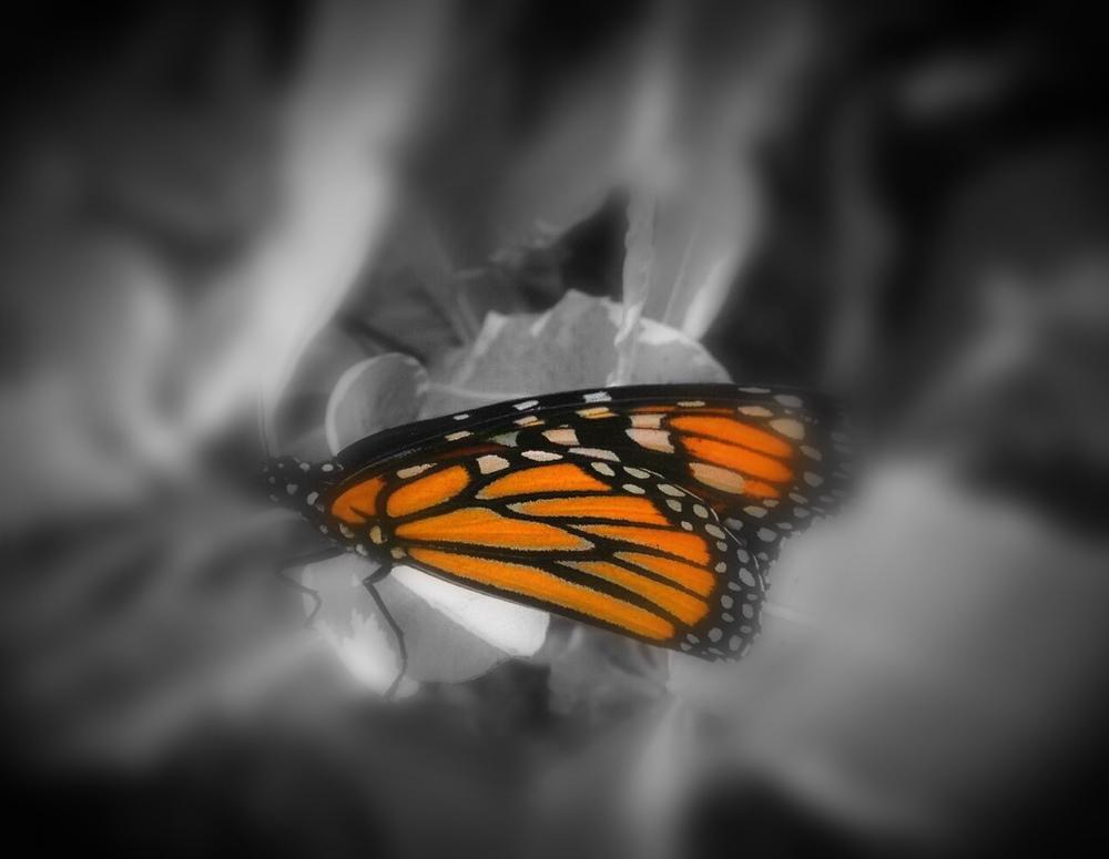 monarch-acrostic.jpg
