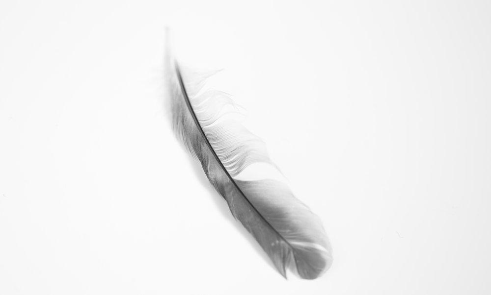 feather_highkey.jpg