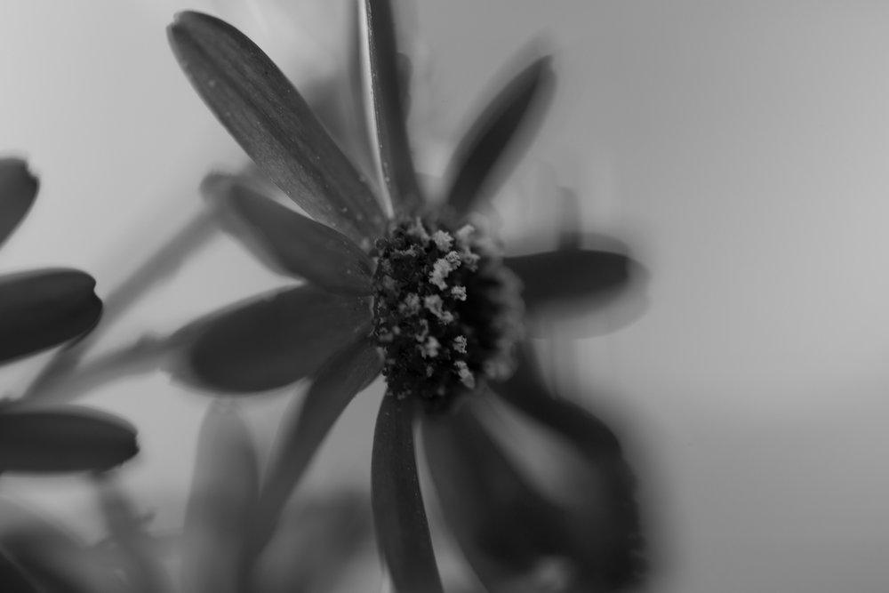 BlurryFlowerBnW.jpg