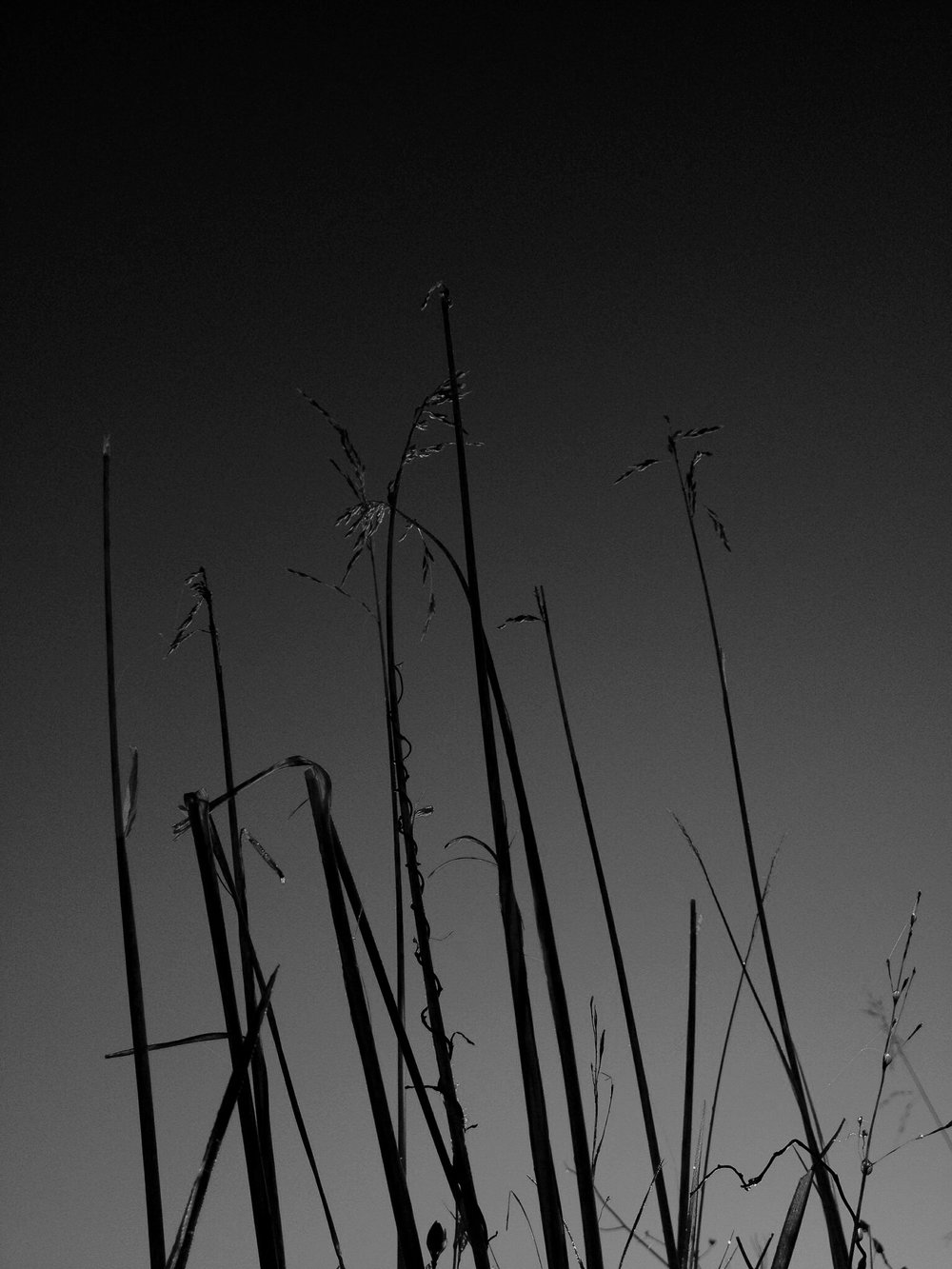 sunrisegrassbnw.jpg