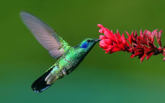 image_1829_3-Hummingbird.jpg