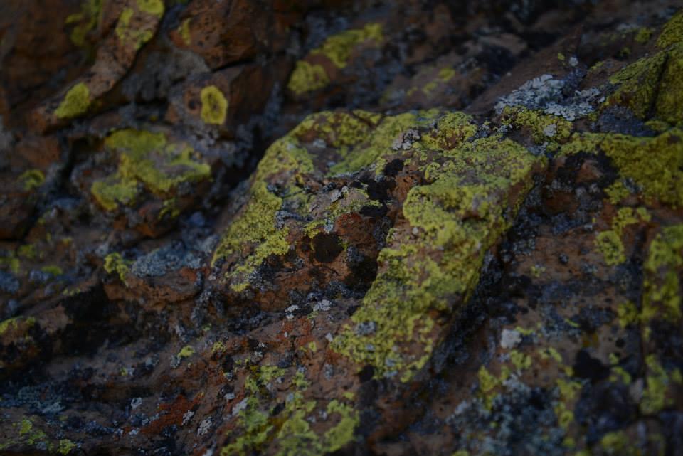 lichen.jpeg