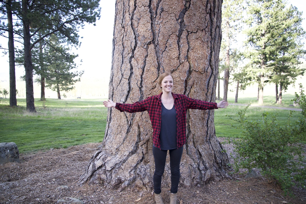 Ponderos Pine, Jospeh, Oregon
