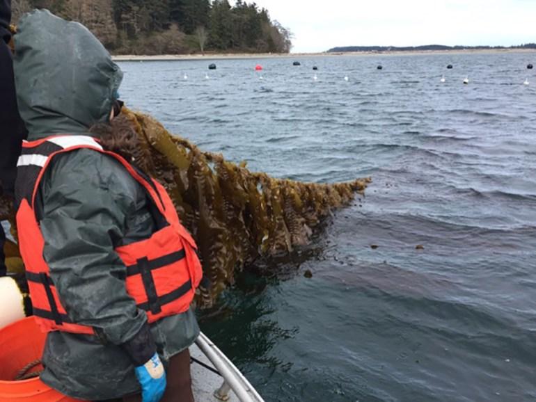 kelp3.jpg