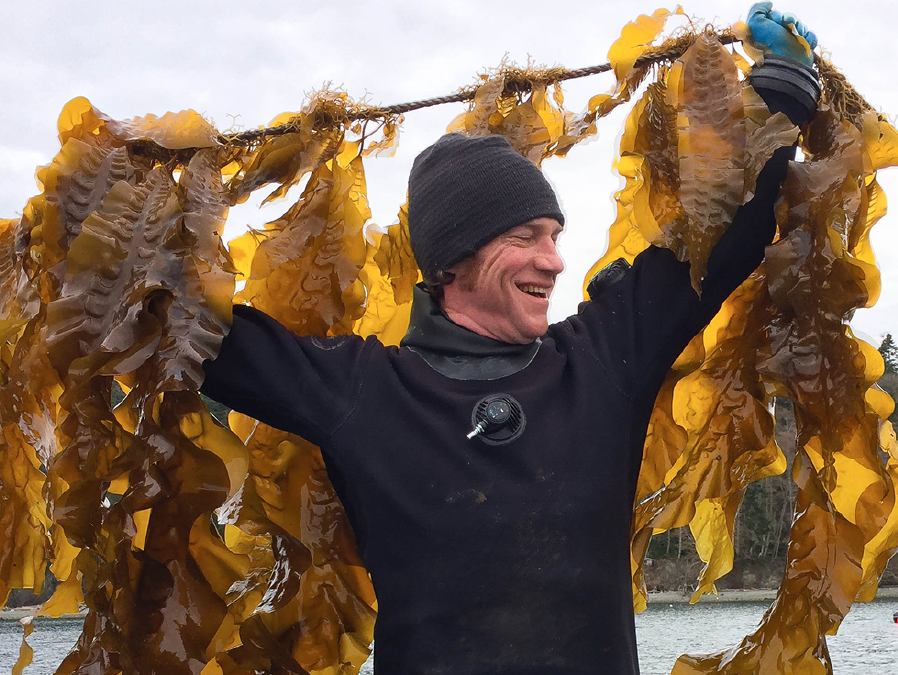 Brian Allen lifts the north section of the kelp line.