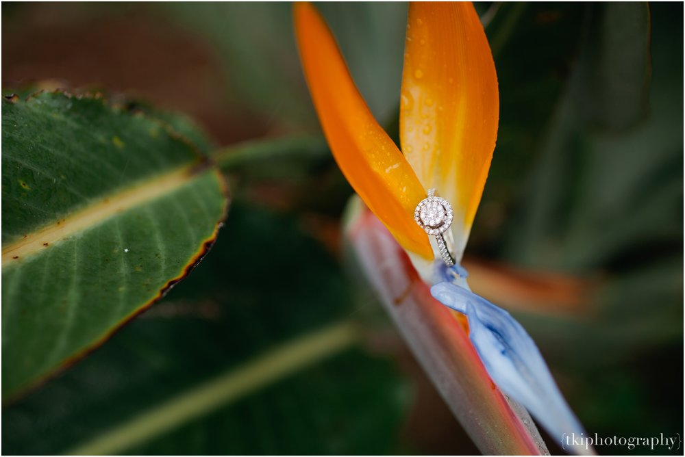 Ring Details displayed on a Bird of Paradise.