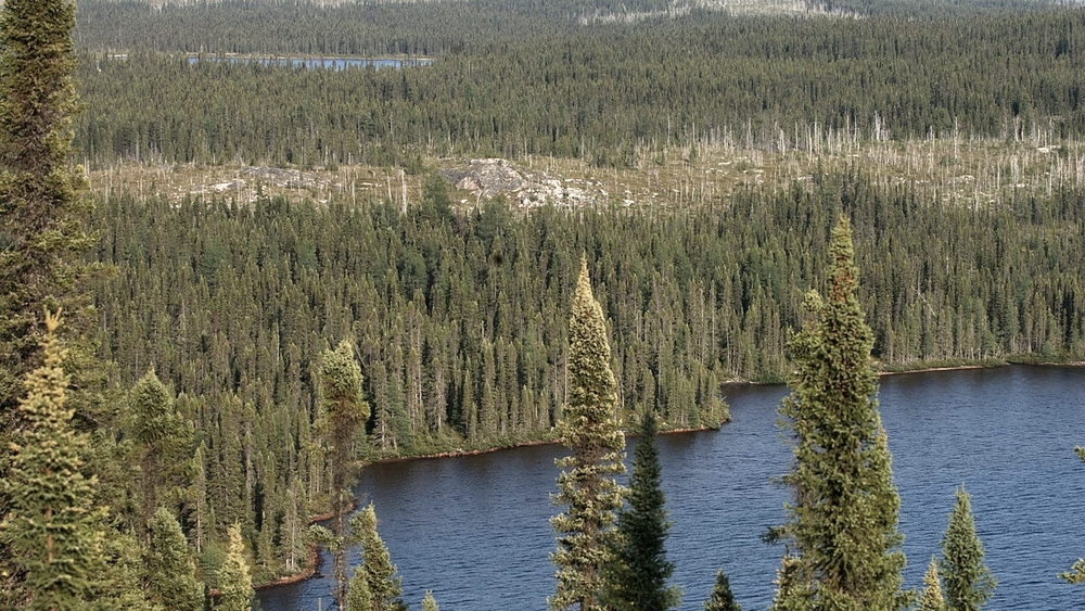 Boreal Forest and Taiga — Ecology Pocket Guide