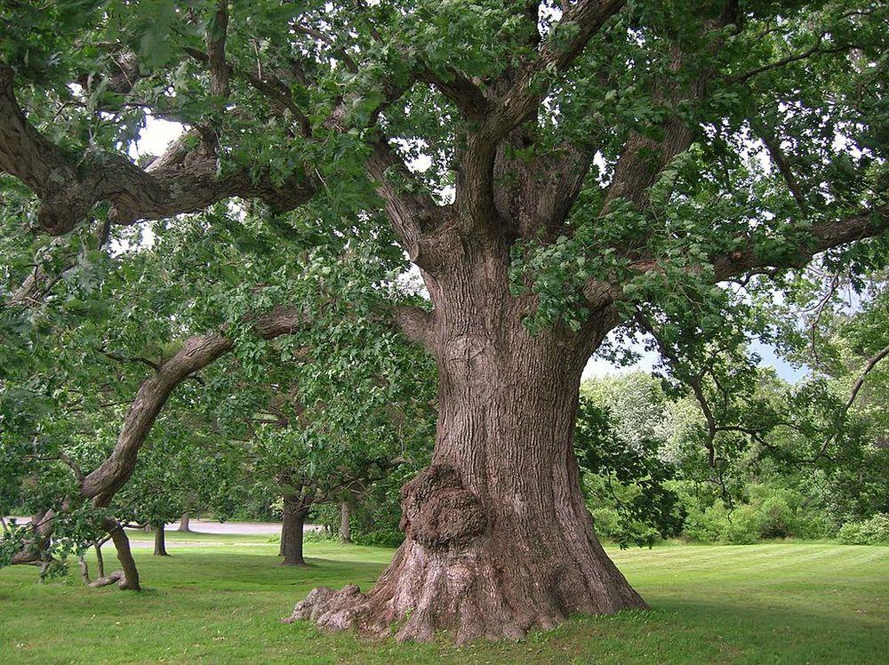 temperate broadleaf forest definition