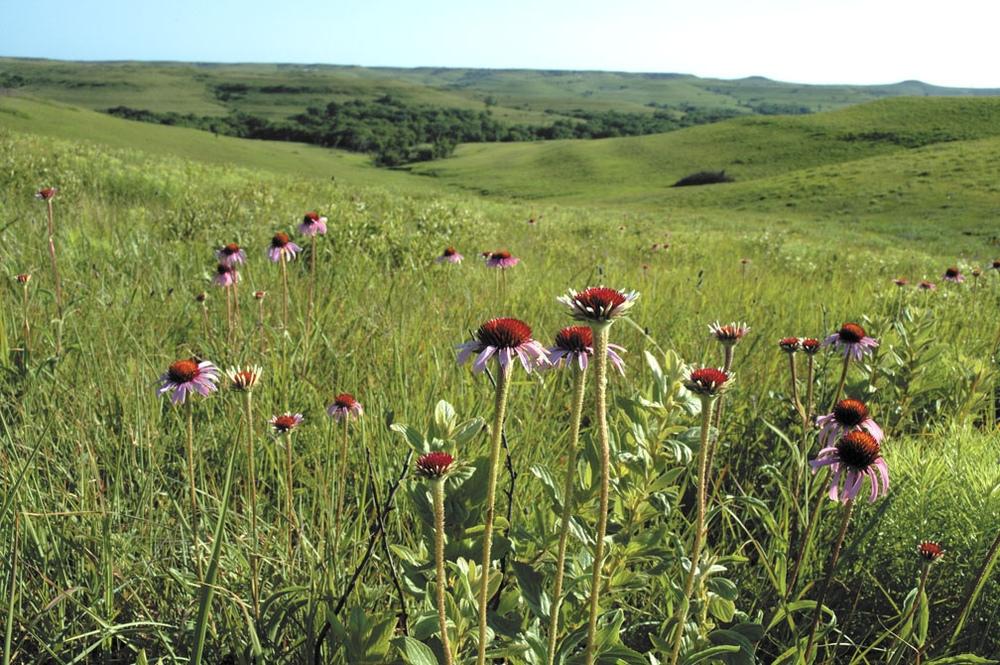 tall grass prarie.jpg