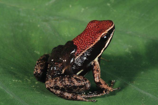 3385dart frog tadpoles.jpg