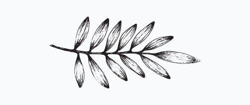 SB leaf.png