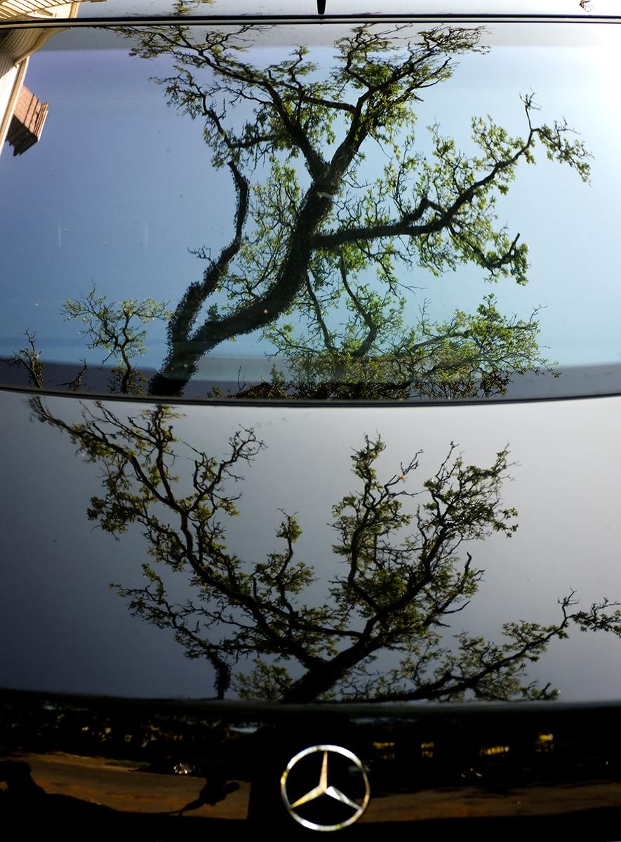 David Armentor - mirror mirror on the wall