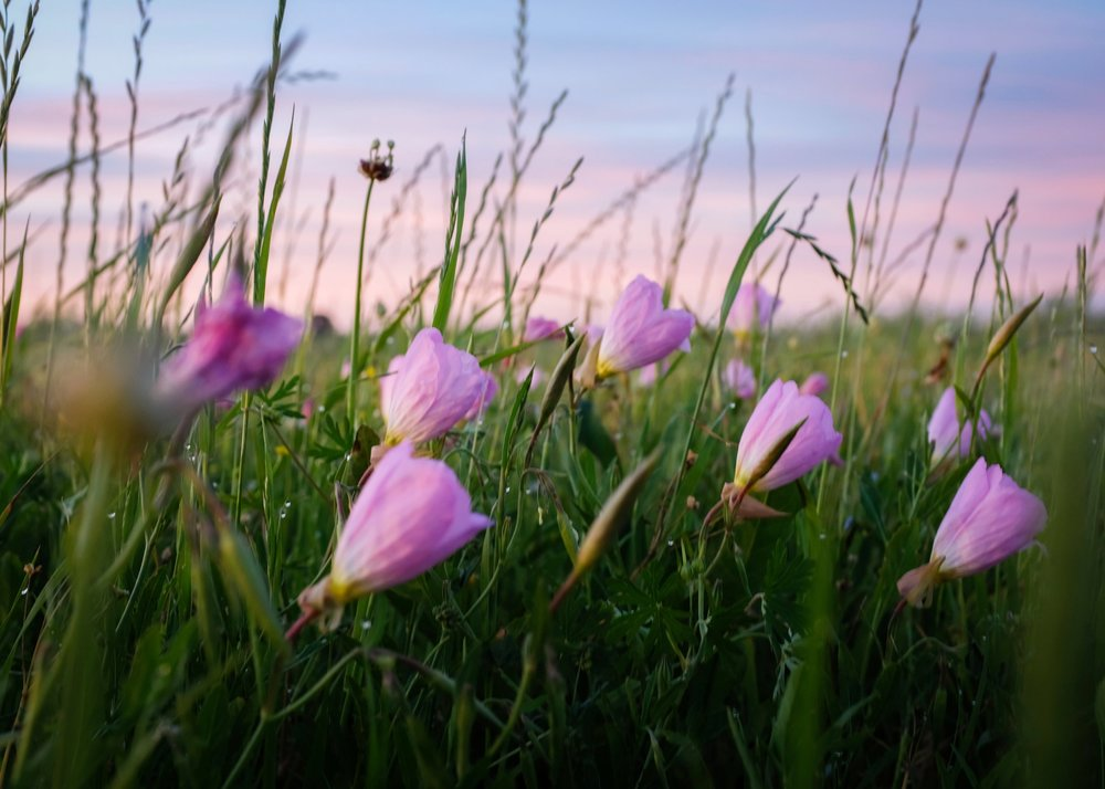 David Armentor - Pretty in Pink