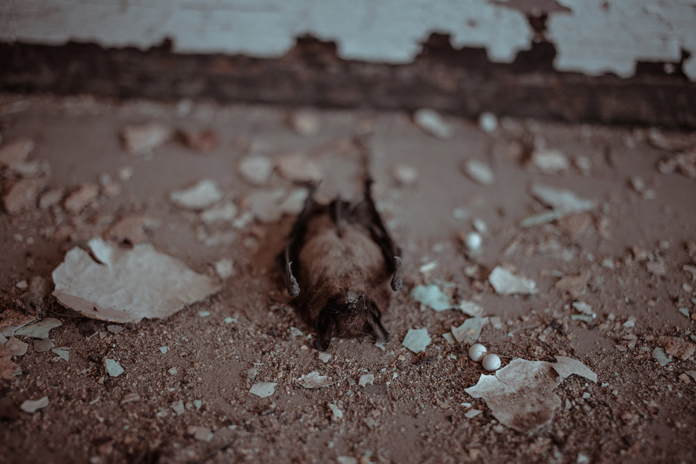 dead-bat-abandon-school-burlington-iowa-gothic-wedding-elopement-raelyn-ramey-photography-41.jpg