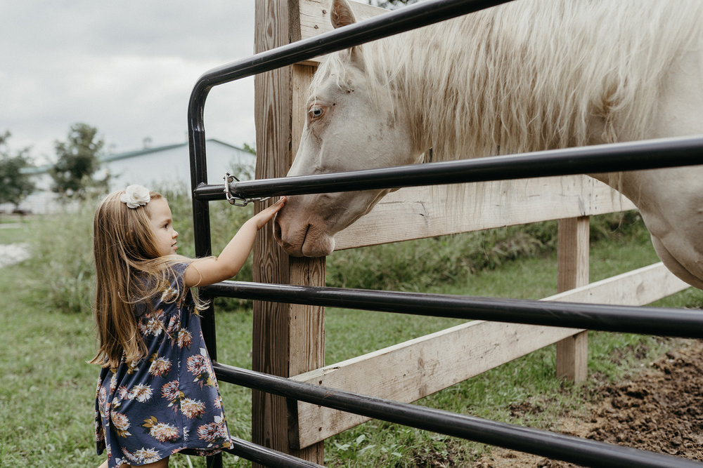 mueller-family-child-petting-white-horse-granger-iowa-raelyn-ramey-photography.jpg