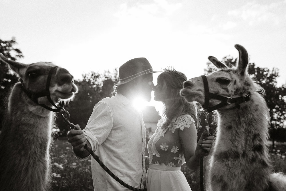 bride-groom-almost-kissing-with-llamas-close-by-myrtle-mae-iris-aisle-dame-maiden-lavender-blue-floral-raelyn-ramey-photography.jpg