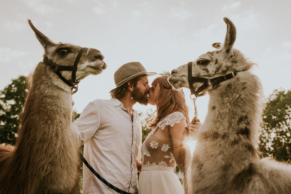 bride-groom-kissing-with-llamas-standing-close-by-myrtle-mae-iris-aisle-dame-maiden-lavender-blue-floral-raelyn-ramey-photography.jpg