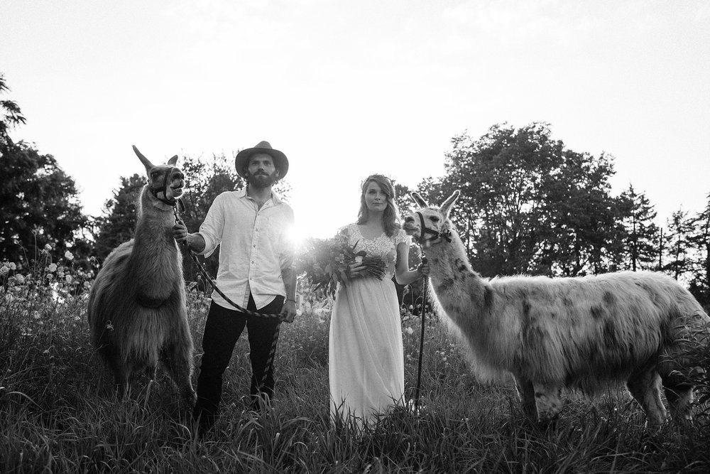 bride-groom-standing-and-holding-llamas-myrtle-mae-iris-aisle-dame-maiden-lavender-blue-floral-raelyn-ramey-photography.jpg