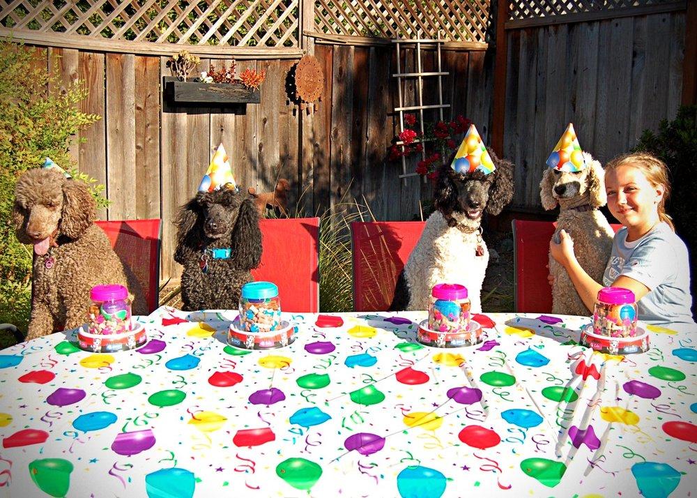 parti_poodle_party.jpg