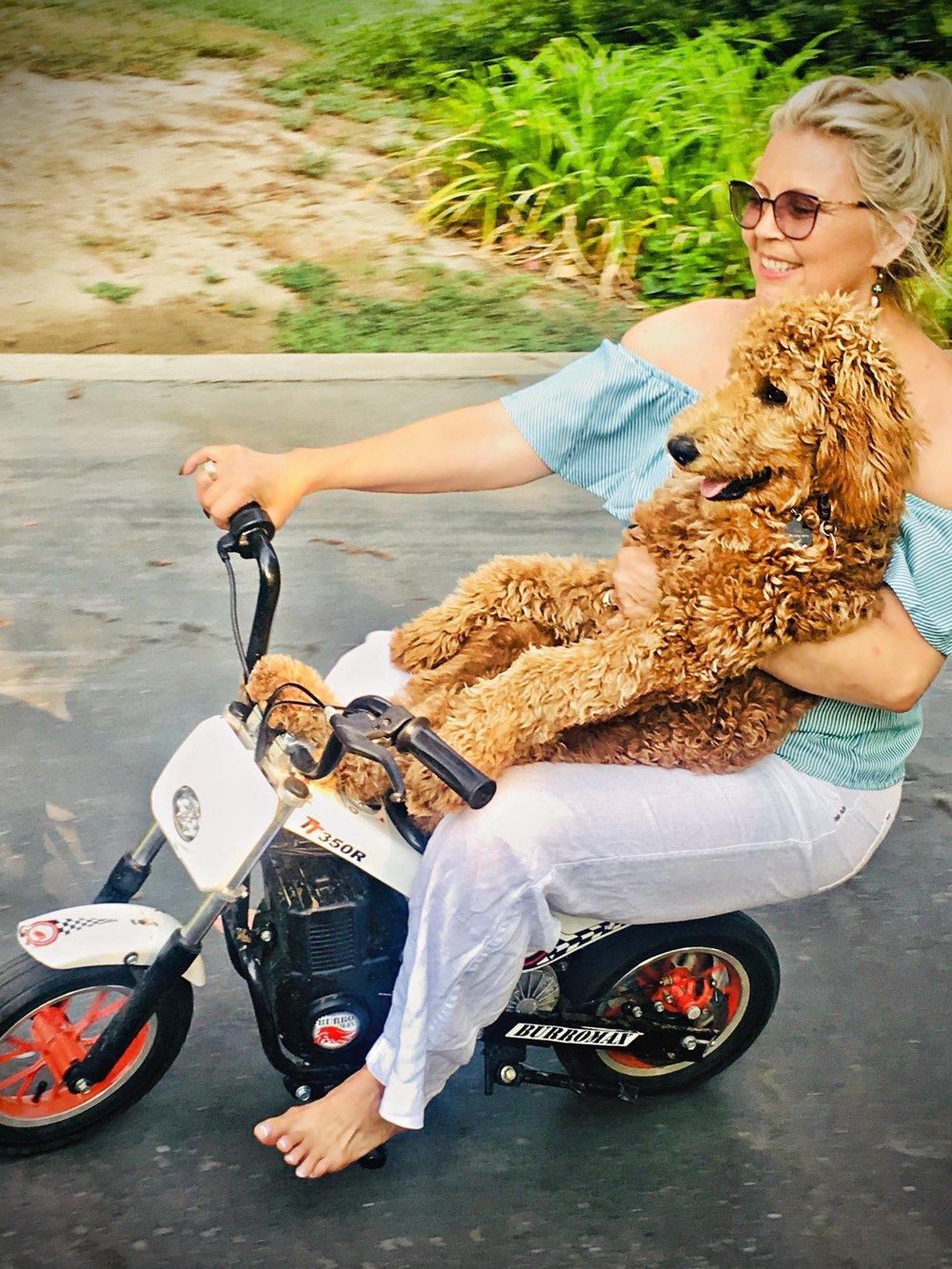 PoodleScooter.JPG
