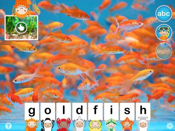 A school of goldfish.