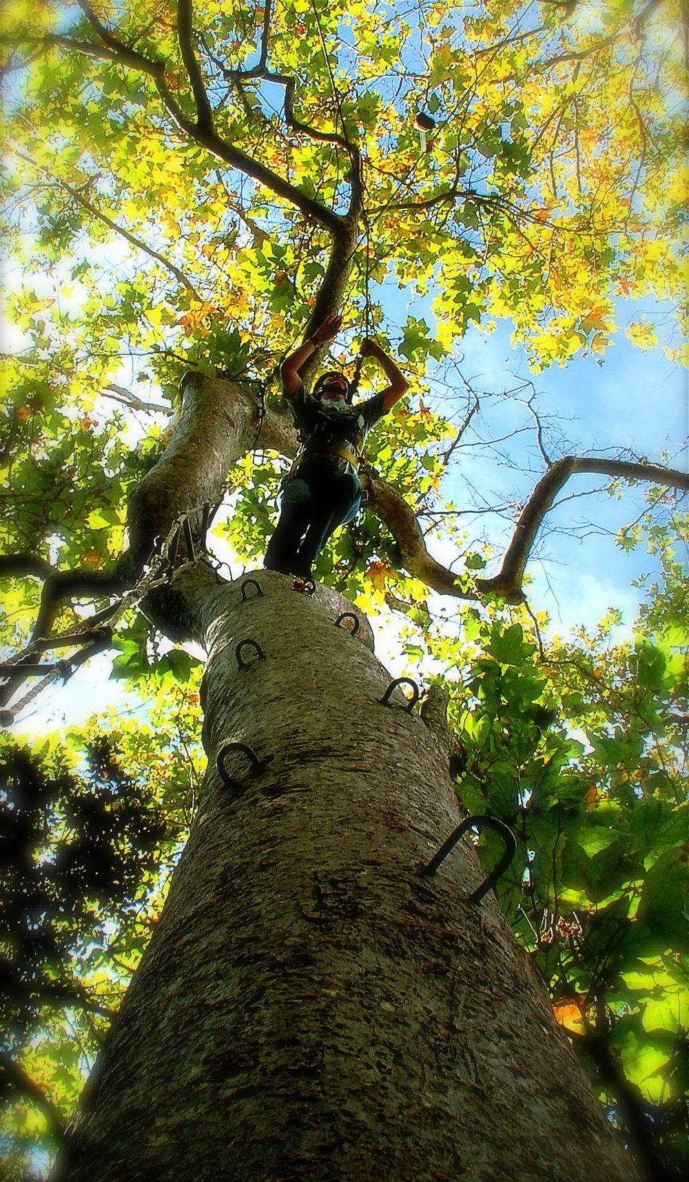 tem tree jump.jpg