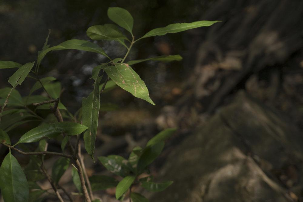 darwintrip-3.jpg