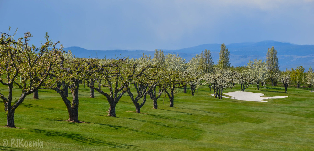 Apple Tree Golf Resort1-4.jpg