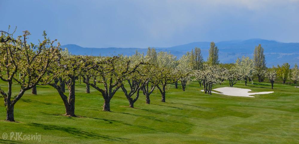 Apple Tree Golf Resort1-4.jpg