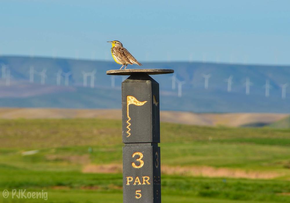 Wine Valley Golf CLub1-5.jpg