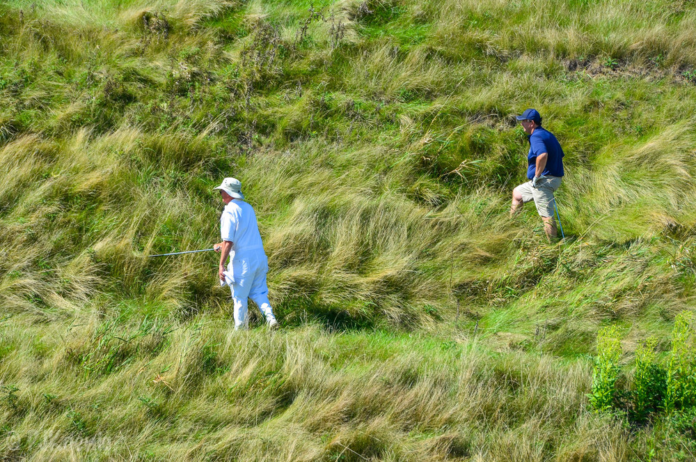 Plenty of tall fescue to hunt down wayward teeshots on Whistling Straits' Irish course.