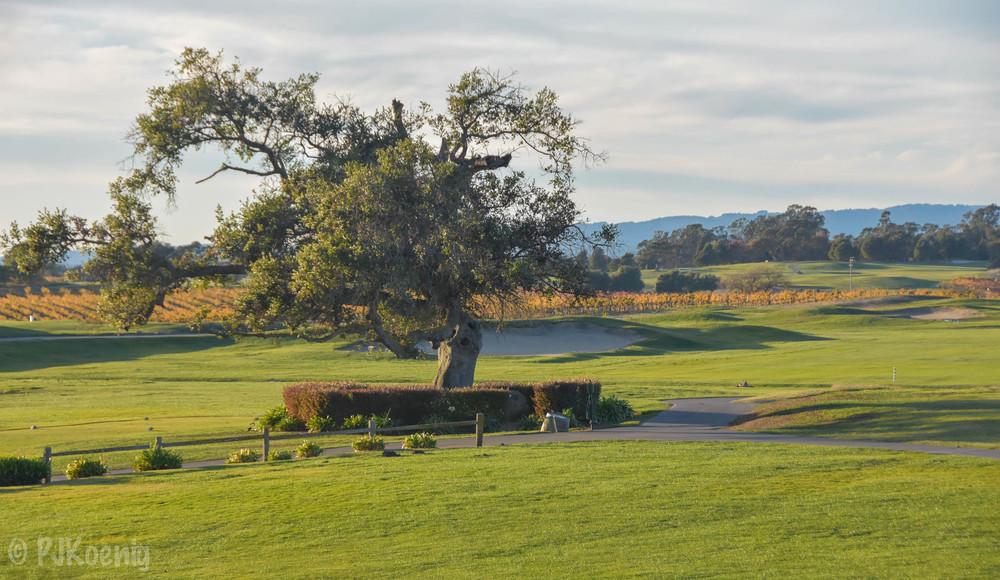 Chardonnay Golf Club1-21.jpg