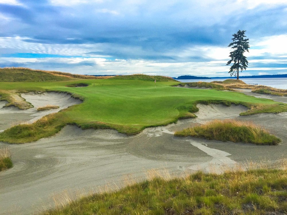 Chamber's Bay Golf Course and it's lone fir on the 15th