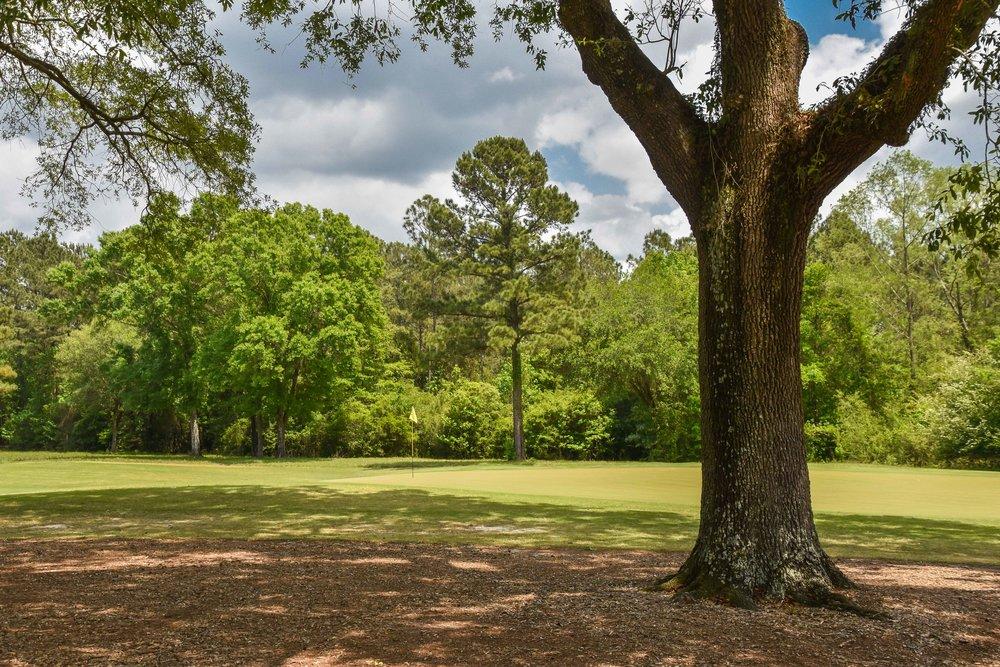 Fallen Oak1-26.jpg