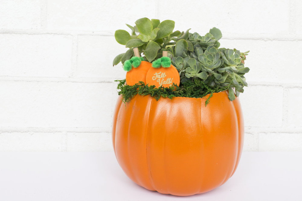 Pumpkin Planter.jpg