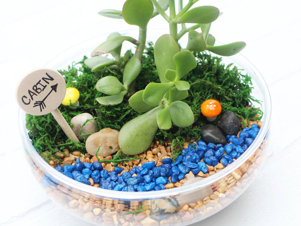 Mountain Terrarium.jpg