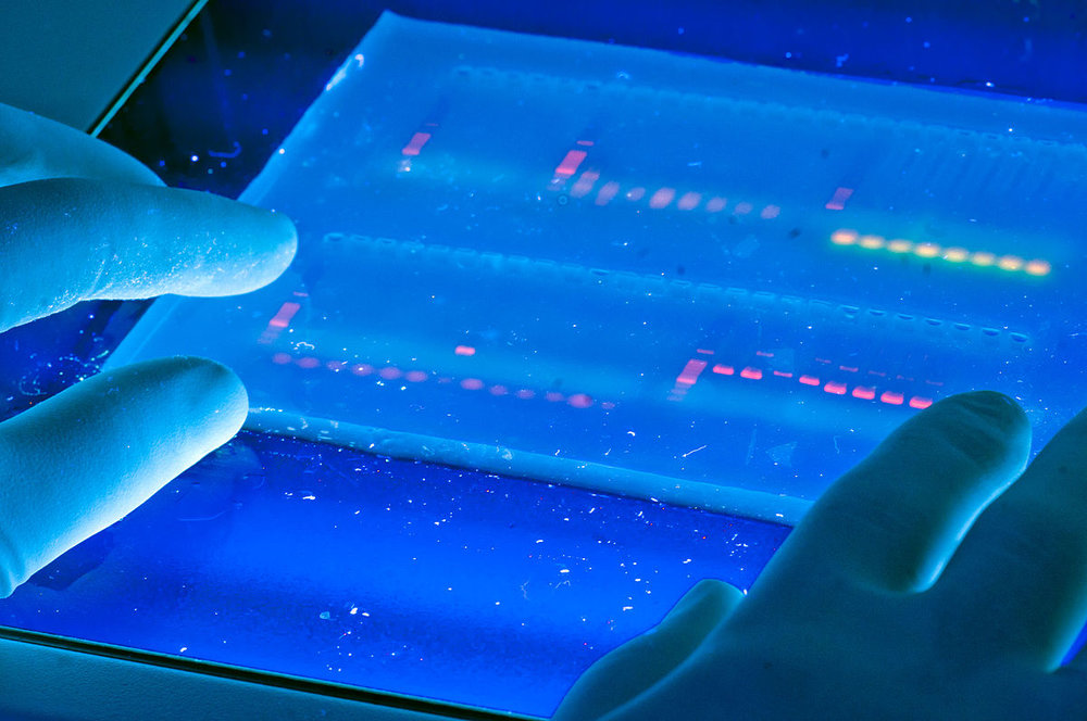 Agarose_gel_with_UV_illumination_-_Ethidium_bromide_stained_DNA_glows_orange_(close-up).jpg