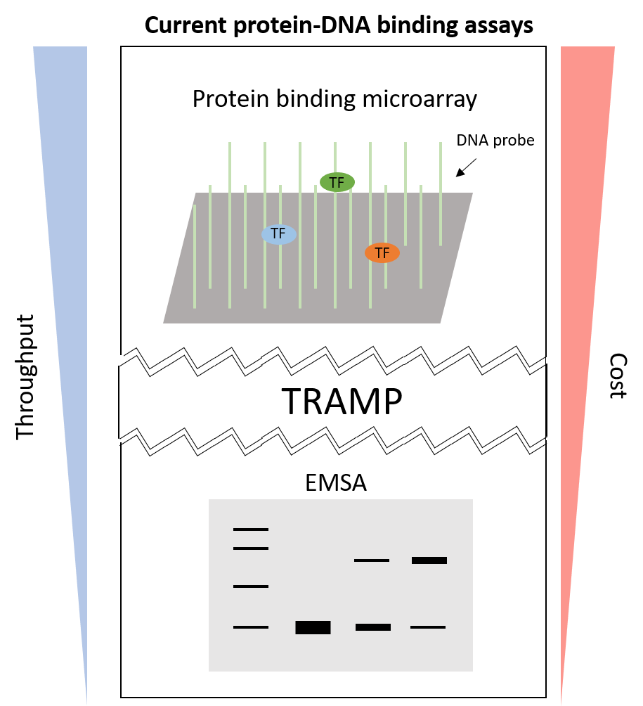 Figure 1: Comparing current protein-DNA binding assays.