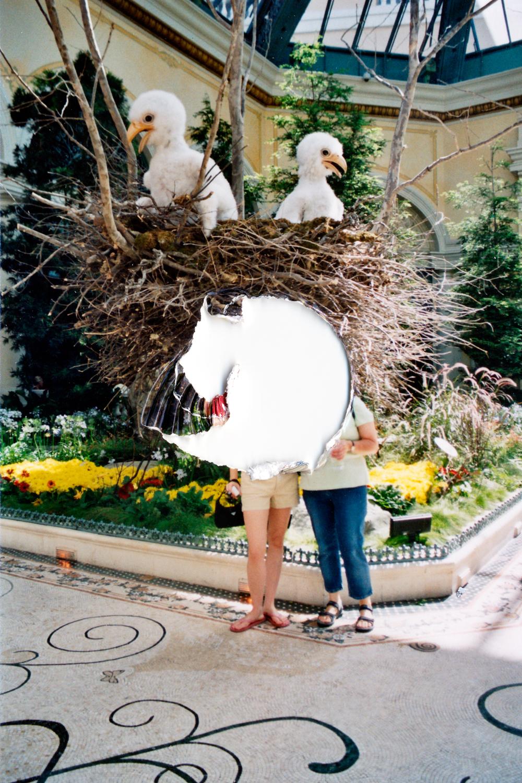 Untitled (Birds), 2006