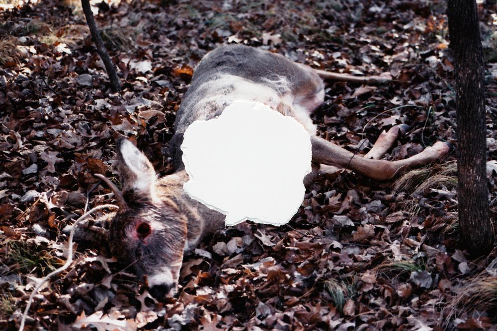 Punctum-deer.jpg