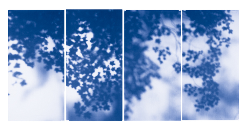 Blue Line of Woods #521, 2012