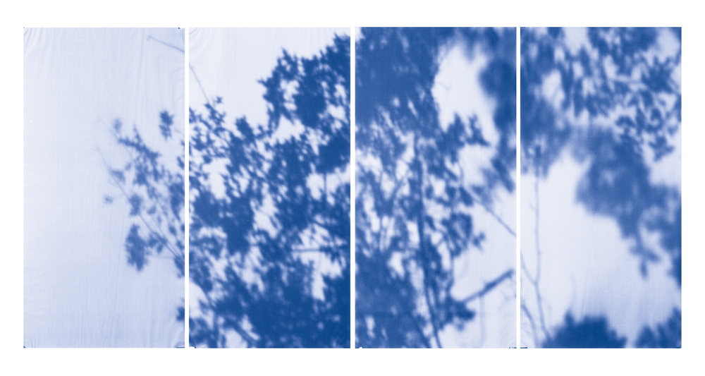 Blue Line of Woods #1142, 2012